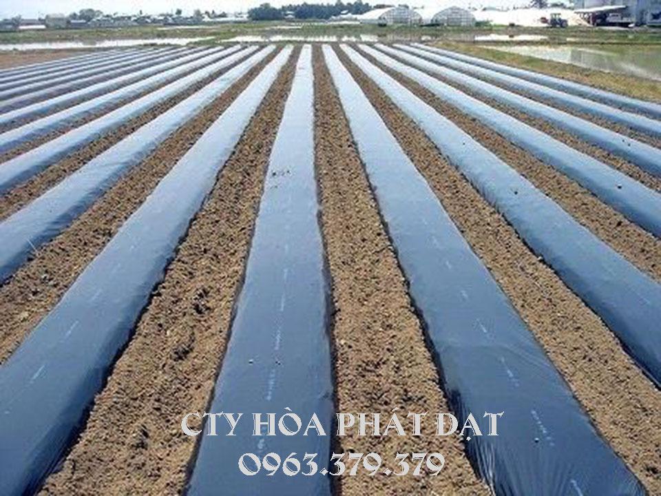 cuộn-bạt-nilong-màu-đen-phủ-đất-trồng-cây