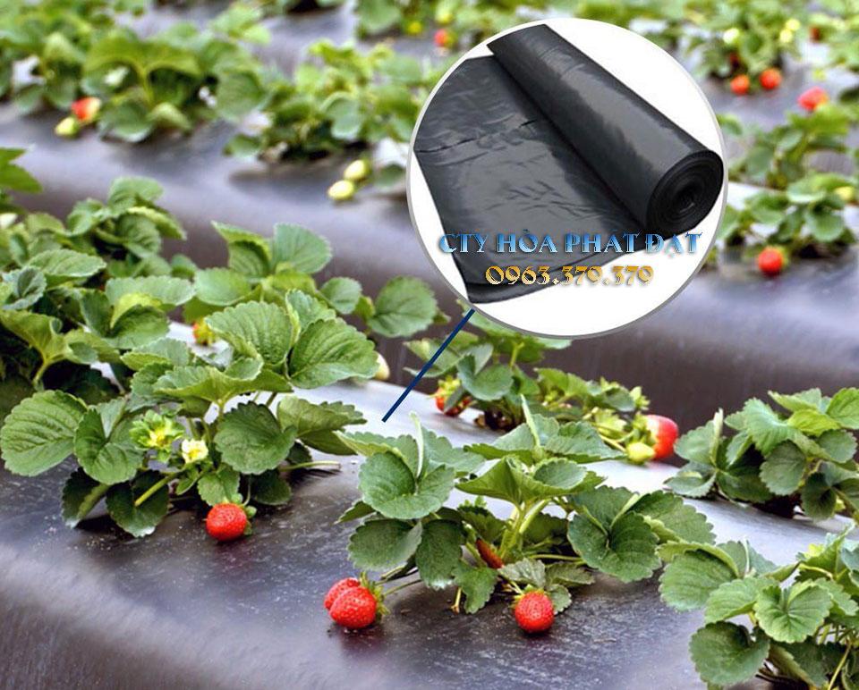 ứng-dụng-cao-tăng-năng-suất-cây-trồng-của-màng-bạt-phủ-đất-trồng-cây